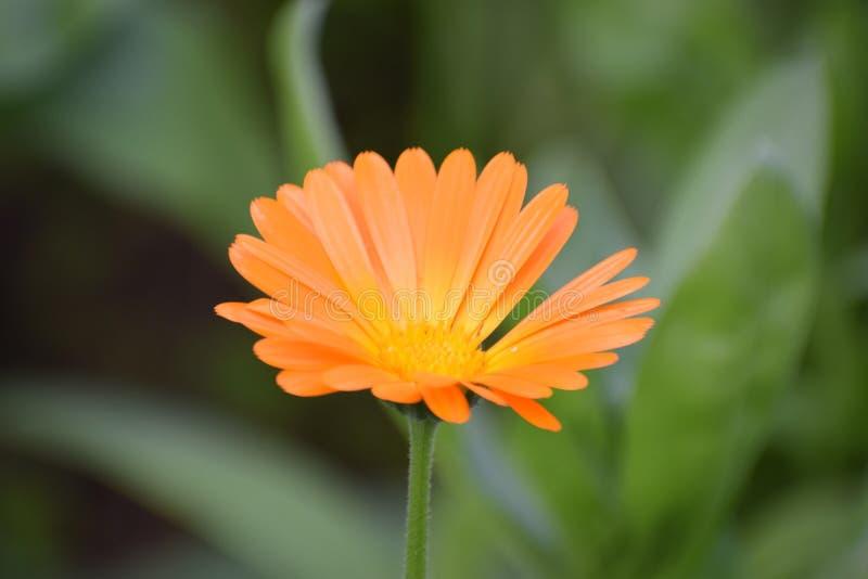 Um raio da casa - flor brilhante fotos de stock