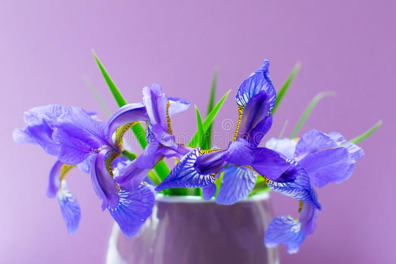 Um ramalhete de íris azuis em um vaso lilás pequeno em um fundo roxo fotos de stock royalty free