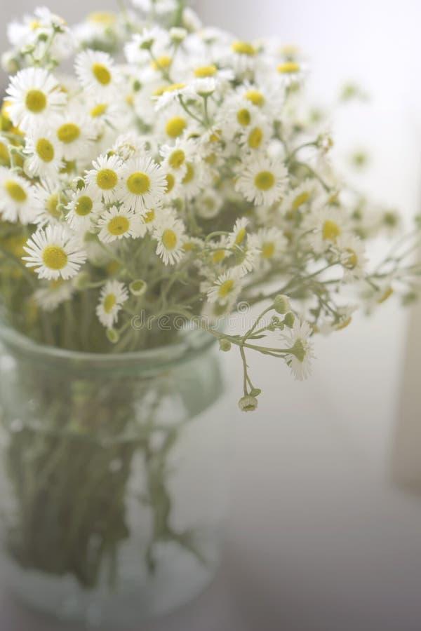 Um ramalhete de camomiles dos wildflowers em um frasco de vidro em uma tabela pela janela Tom do vintage fotografia de stock
