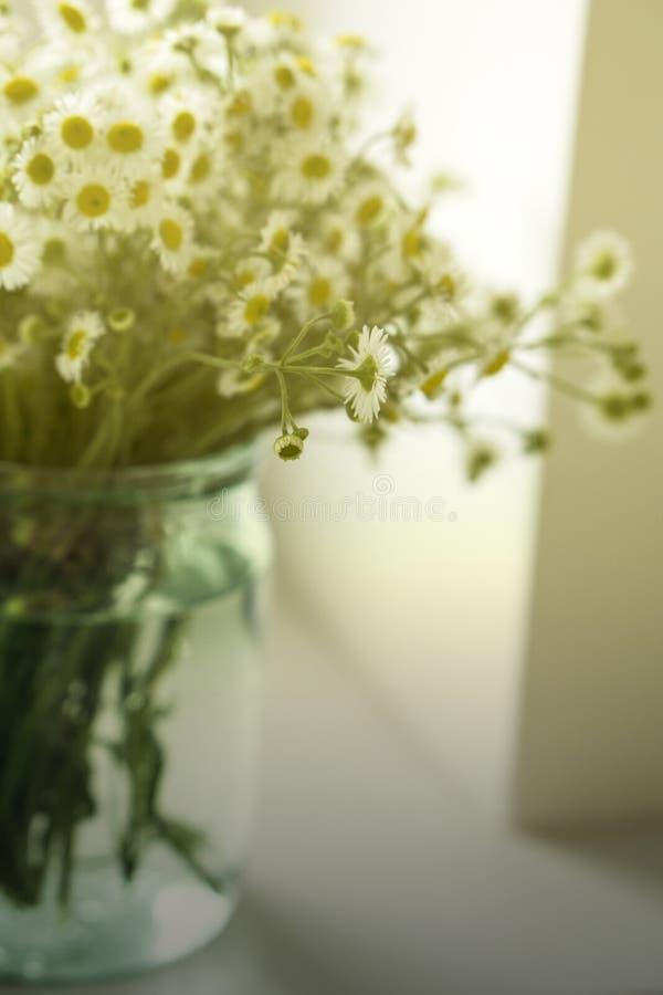 Um ramalhete de camomiles dos wildflowers em um frasco de vidro em uma tabela pela janela Tom do vintage fotos de stock