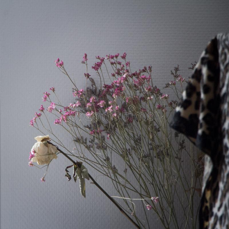 Um ramalhete de flores cor-de-rosa secas e de uma rosa seca branca contra uma parede cinzenta, decoração do apartamento foto de stock