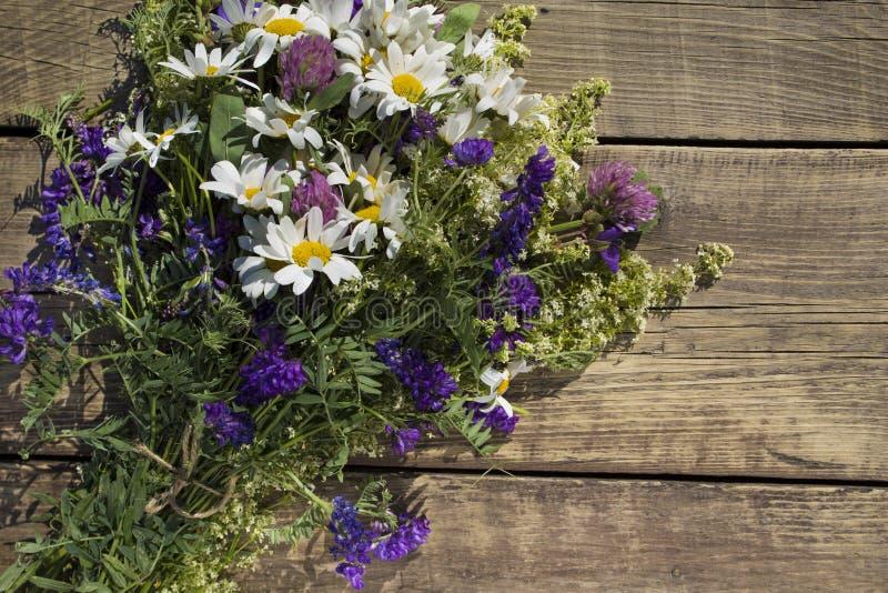 Um ramalhete de flores selvagens, de camomila, de trevo e de doninhas fotografia de stock