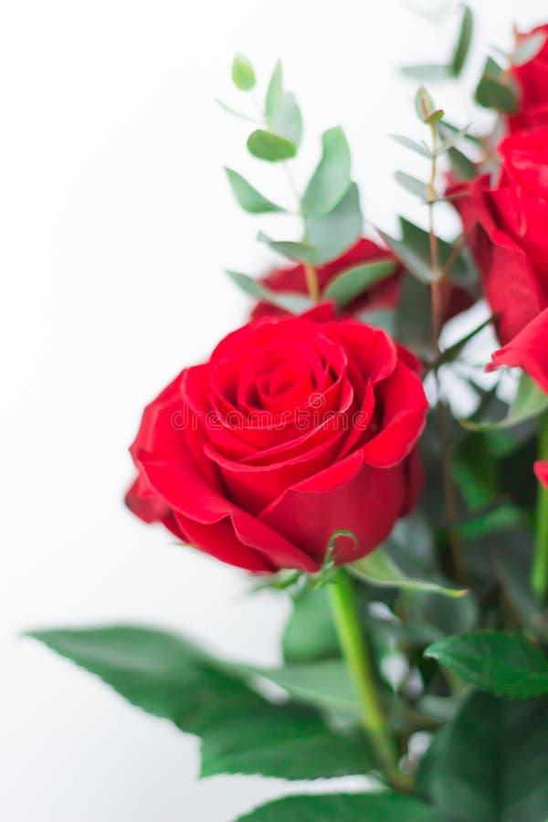 Um ramalhete de rosas vermelhas em um fundo branco Um presente para amado fotos de stock royalty free