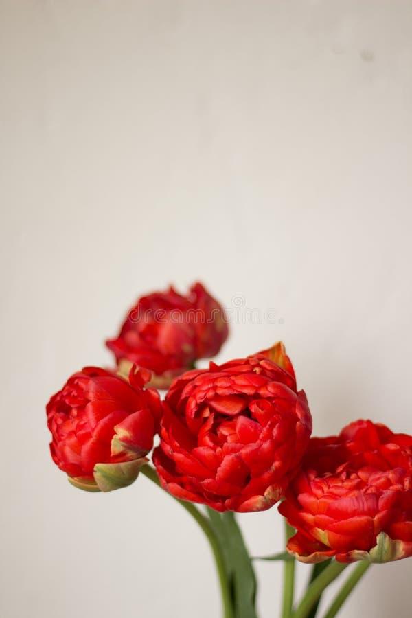 Um ramalhete de tulipas vermelhas fotografia de stock royalty free