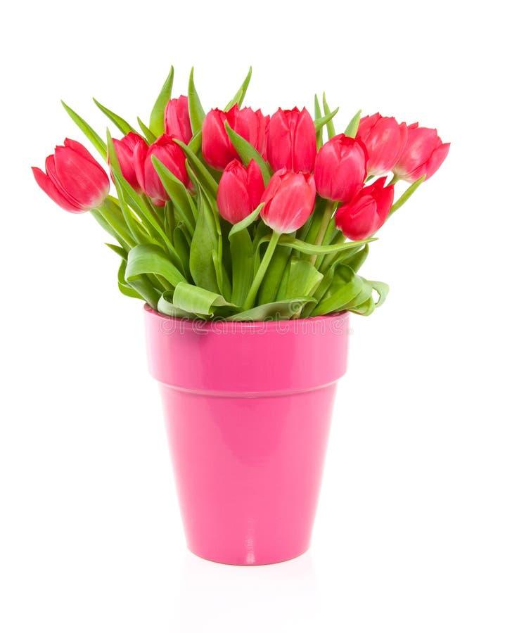 Um ramalhete de tulips coloridos vermelhos em um vaso foto de stock royalty free