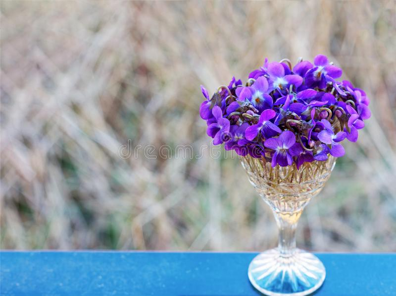 Um ramalhete de violetas selvagens floresce em um close-up do cristal do vintage foto de stock