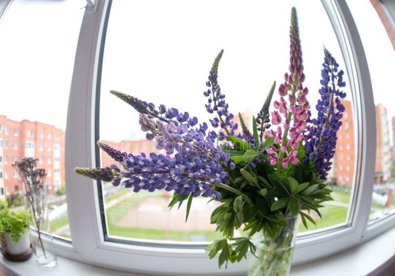 Um ramalhete dos lupines na janela imagens de stock royalty free
