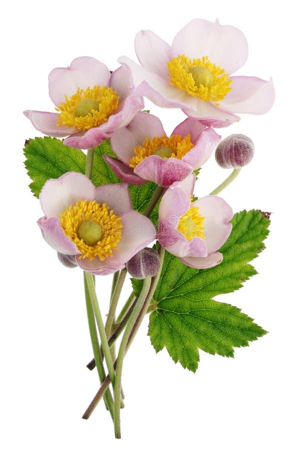 Um ramalhete pequeno do rosa selvagem do campo floresce com um anel luxúria de y imagem de stock