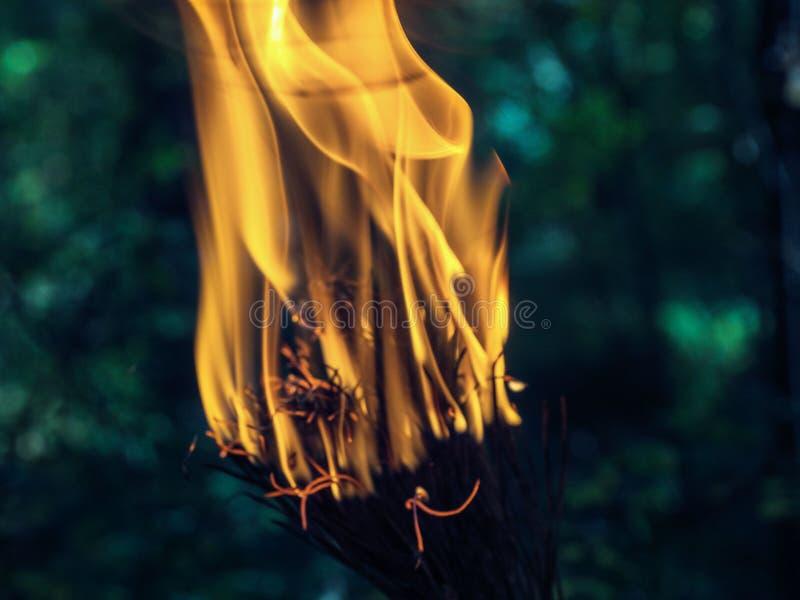 Um ramo belamente de queimadura de uma árvore seca das coníferas fotografia de stock