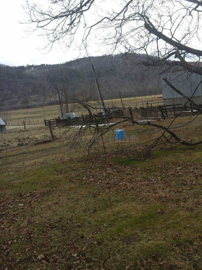Um ramo de árvore puxa para baixo um com linha de vara bonde fotos de stock