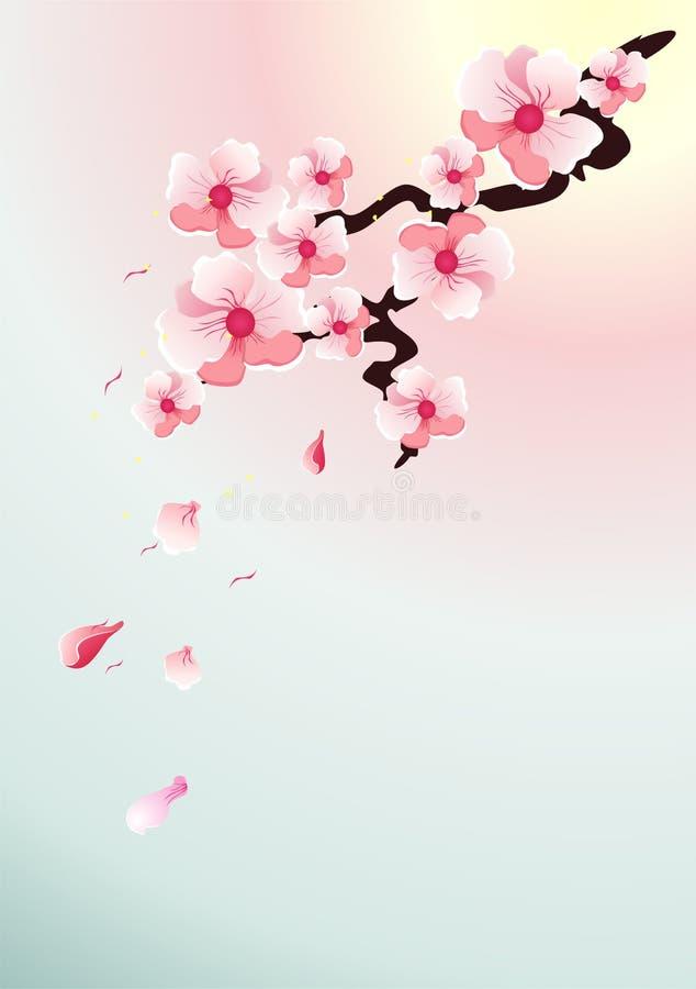 Um ramo de sakura de florescência fotos de stock