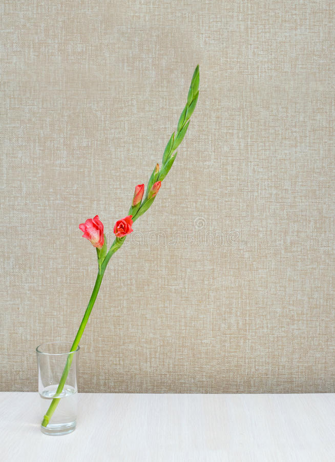 Um ramo de um tipo de flor alaranjado de florescência foto de stock