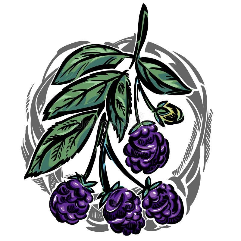 Um ramo de uma amora preta ilustração royalty free