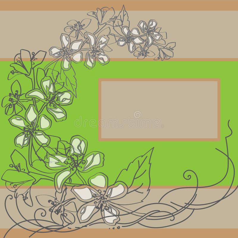 Um ramo do jasmim bonito imagem de stock