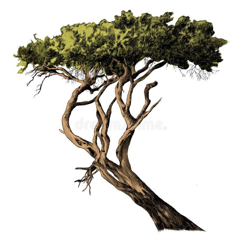 Um ramo dos gráficos de vetor africanos do esboço da árvore ilustração do vetor