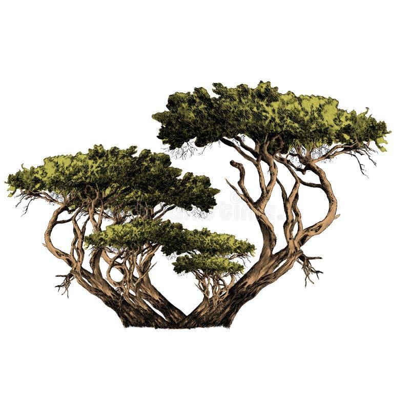 Um ramo dos gráficos de vetor africanos do esboço da árvore ilustração royalty free