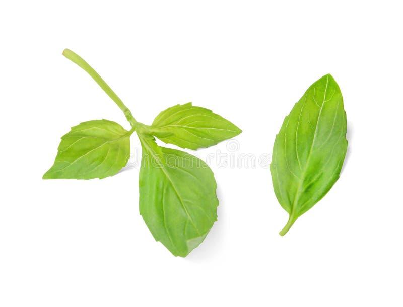 Um ramo pequeno da manjeric?o e da folha da manjeric?o em um fundo isolado branco Vista superior fotografia de stock