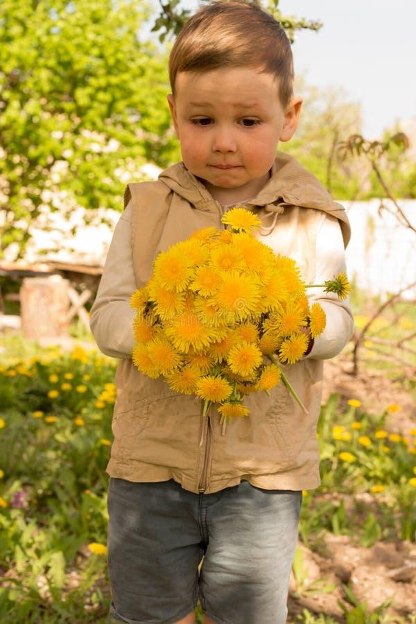 Um rapaz pequeno está guardando um grande ramalhete dos dentes-de-leão amarelos, tímido, fazendo caretas, um presente a sua mãe imagem de stock royalty free