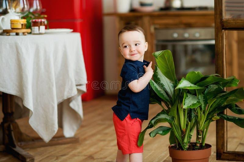 Um rapaz pequeno está no meio de uma sala ao lado de uma grande planta interna fotos de stock