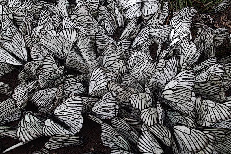 Um rebanho das borboletas fotos de stock royalty free