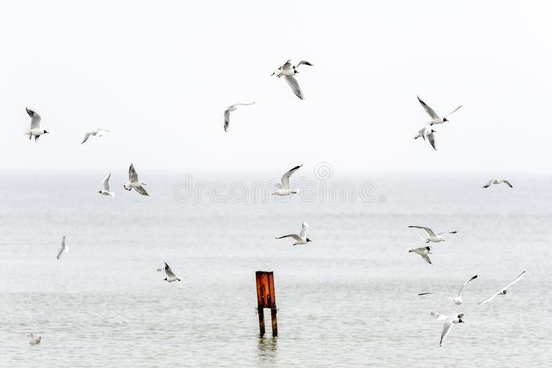 Um rebanho das gaivotas que voam sobre a ba?a do porto imagens de stock royalty free