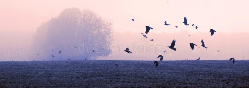 Um rebanho das gralhas dos corvos foto de stock