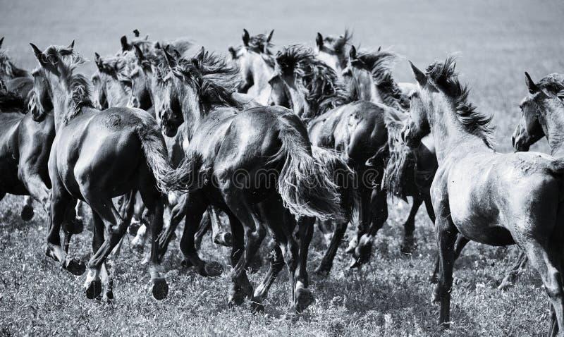 Um rebanho de cavalos novos imagem de stock
