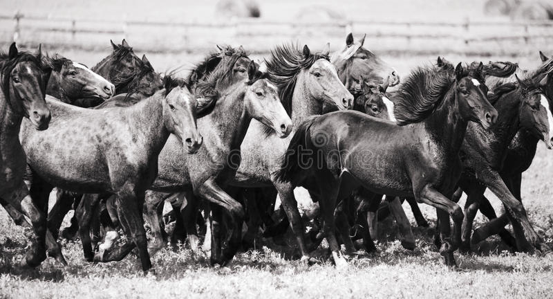 Um rebanho de cavalos novos fotografia de stock royalty free