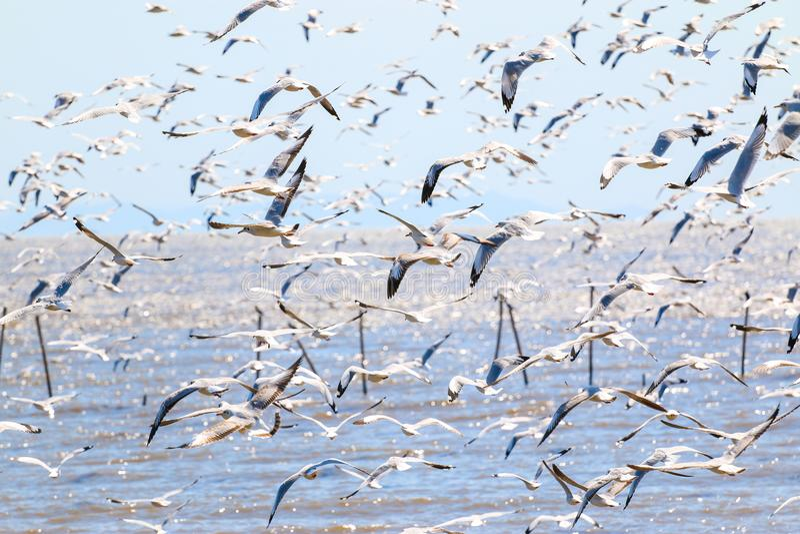 Um rebanho do pássaro, voo da gaivota no céu fotos de stock royalty free