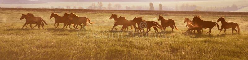 Um rebanho dos cavalos no nascer do sol fotos de stock
