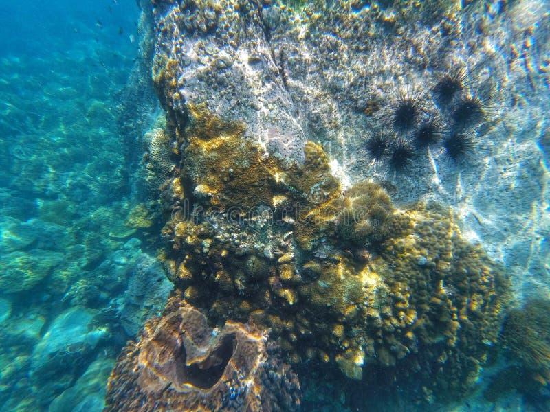 Um recife de corais é um subaquático com peixes e ouriços-do-mar foto de stock