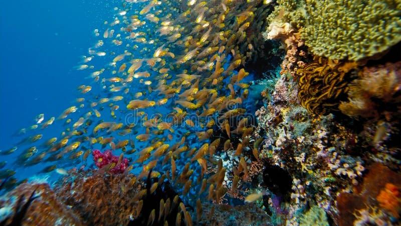 Um recife de corais diverso, com crinoids e corais macios, Papua Niugini, Indonésia Esta área é alta na biodiversidade marinha foto de stock