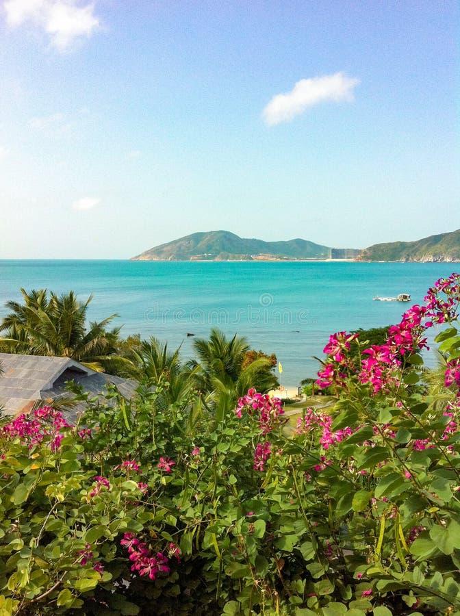Um recurso tropical perto do mar fotos de stock royalty free