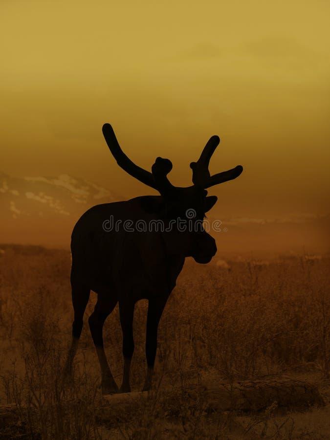 Um rendeer no norte de Mongolie fotografia de stock royalty free