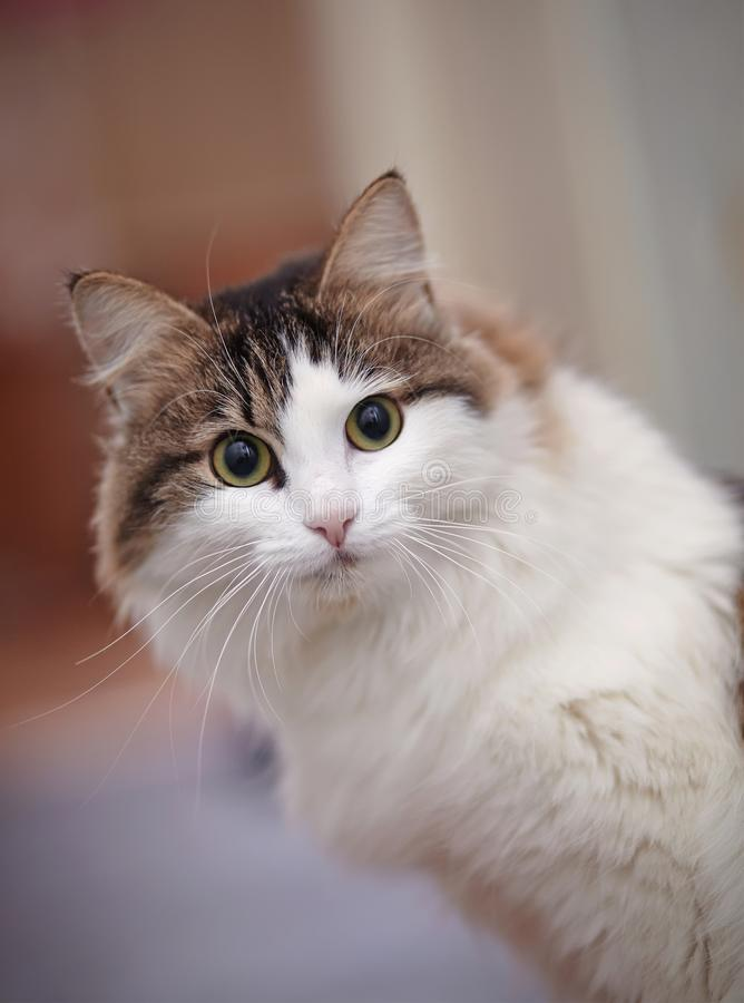 Um retrato do gato surpreendido bonito foto de stock