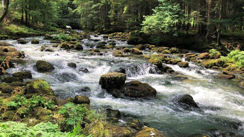 Um rio no meio de uma floresta imagem de stock royalty free