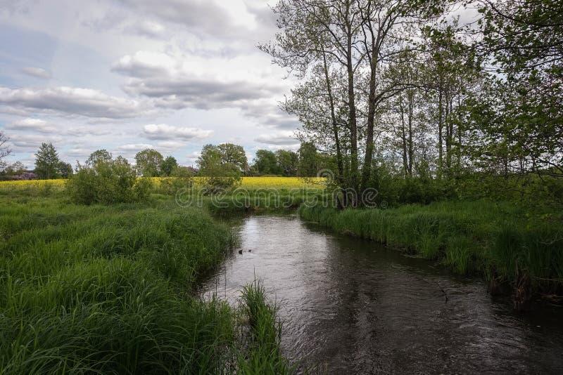 Um rio pequeno no campo e uma grama verde em ambos os lados fotos de stock