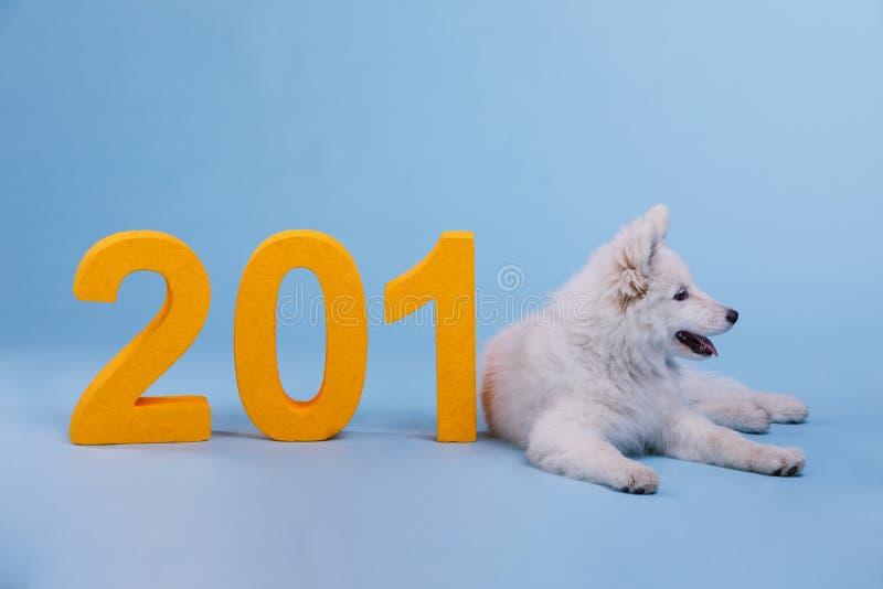 Um Samoyed do cachorrinho encontra-se perto dos dígitos O cão é o símbolo dos 2018 anos novos foto de stock royalty free