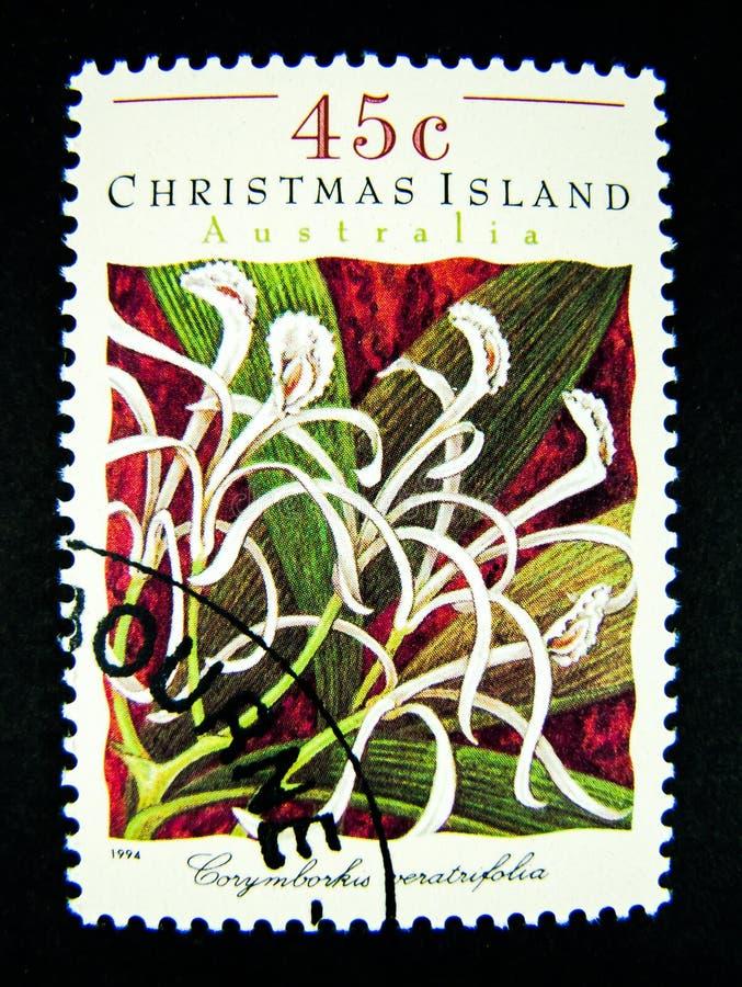 Um selo impresso em Austrália mostra uma imagem dos wildflowers brancos em Ilhas Christmas no valor no centavo 45 imagens de stock royalty free