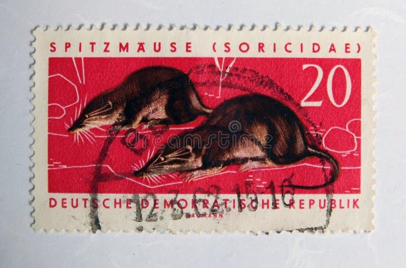 Um selo postal oriental vermelho velho com uma imagem de dois musaranhos imagem de stock