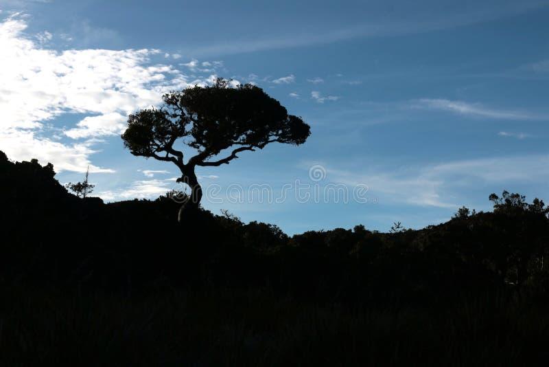 Um sihouette da árvore com um fundo do céu fotos de stock