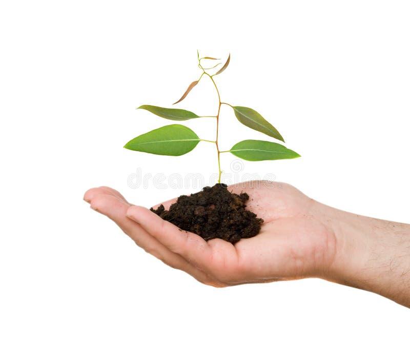 Um sprout na palma imagens de stock royalty free