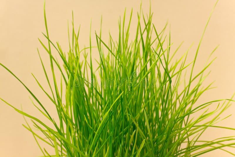 Um sprout verde de um carregador imagens de stock royalty free