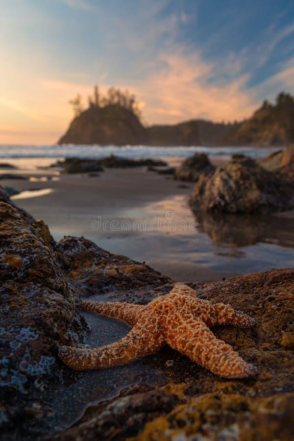 Um Starfish na Praia ao Sunset nos Tidepools fotos de stock royalty free