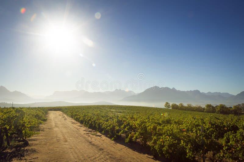 Um Sun ilumina acima uma estrada verde luxúria do vinhedo e do cascalho fotos de stock royalty free
