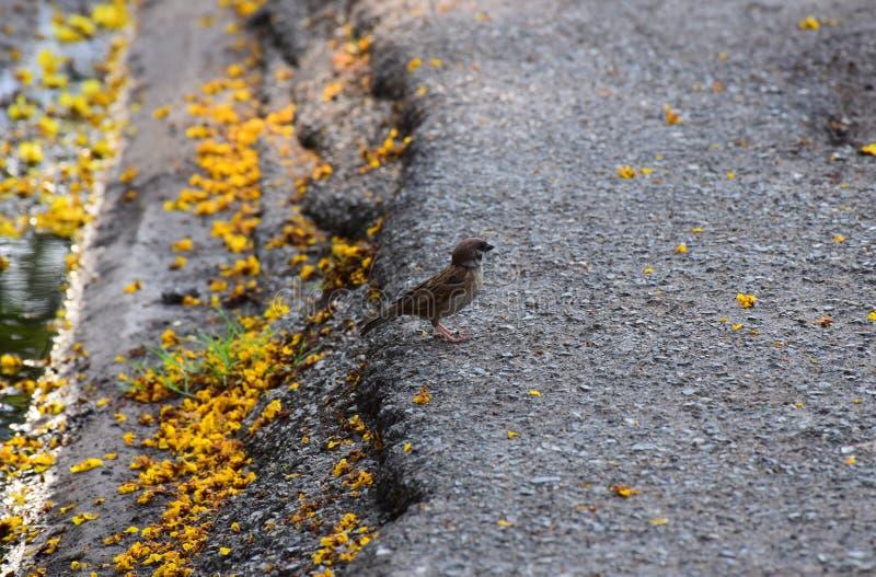 Um suporte pequeno do pássaro na borda da estrada fotos de stock
