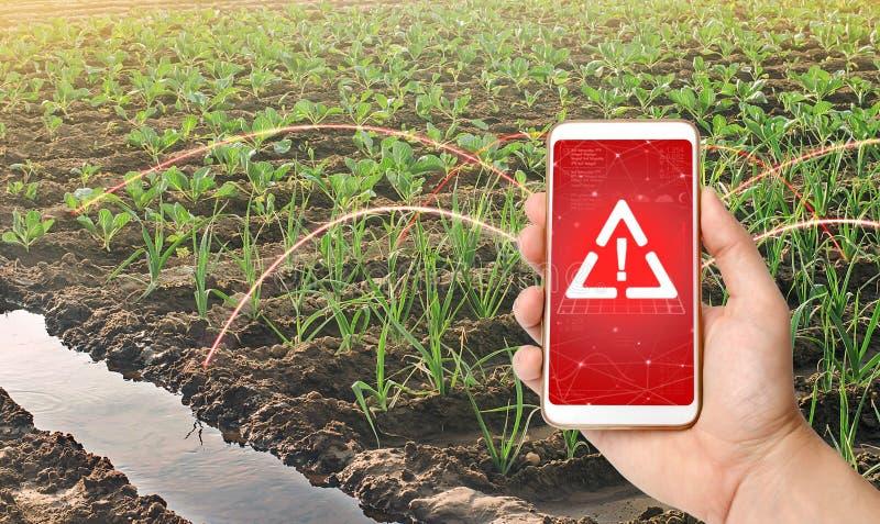Um telefone e um sinal de aviso sobre o fundo de grandes e jovens plantações de repolho Agribusiness Pesticidas nocivos fotografia de stock royalty free