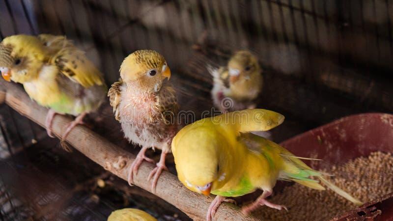 Um tema amarelo do pássaro fotografia de stock