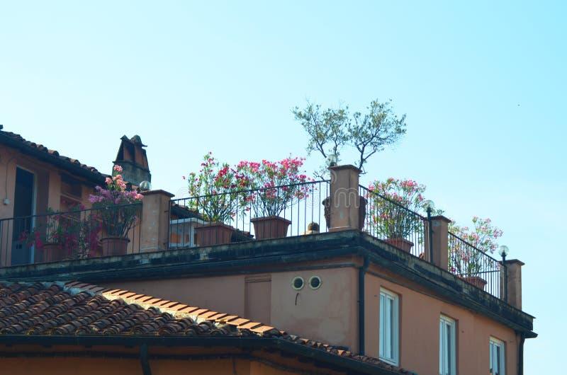 Um terraço da telhado-parte superior em Itália cobriu com as flores imagens de stock