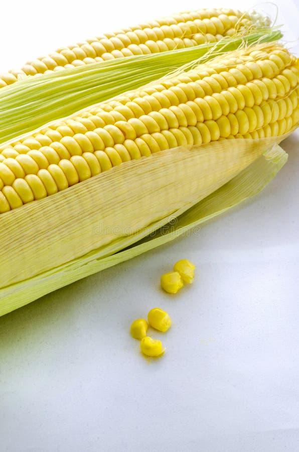 Um tiro amarelo dourado de duas espigas de milho em um fundo branco fotos de stock